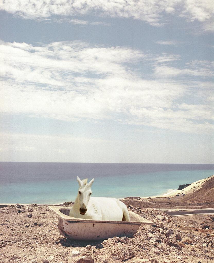 animals-landscapes-01.jpg